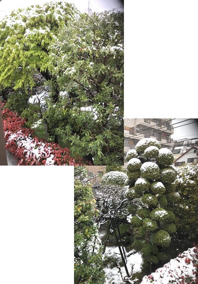 お稽古場からの雪❄景色|世田谷・自由が丘 天使バレエスクール