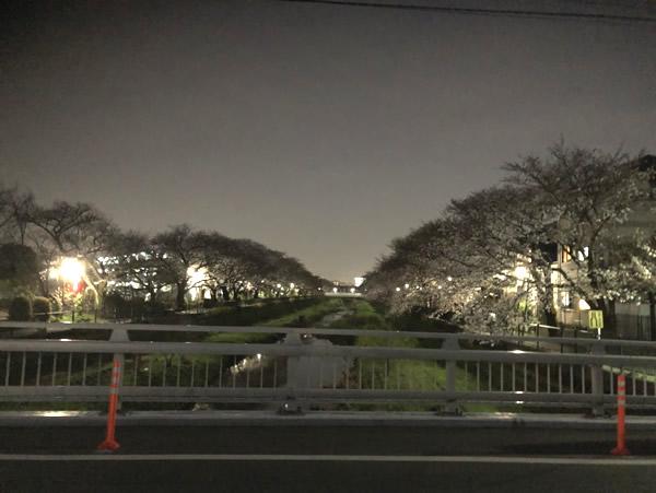 野川の夜桜-2|世田谷・自由が丘 天使バレエスクール
