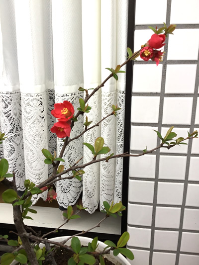 春を告げる お花たち♡2|世田谷・自由が丘 天使バレエスクール