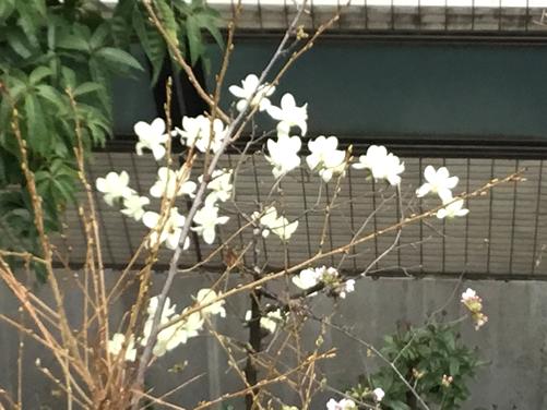自由が丘のヴェルサイユ宮殿・春を告げる お花たち♡1|世田谷・自由が丘 天使バレエスクール